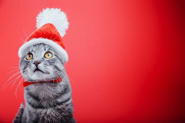 灰色のぶち猫は赤にサンタの帽子をかぶっています