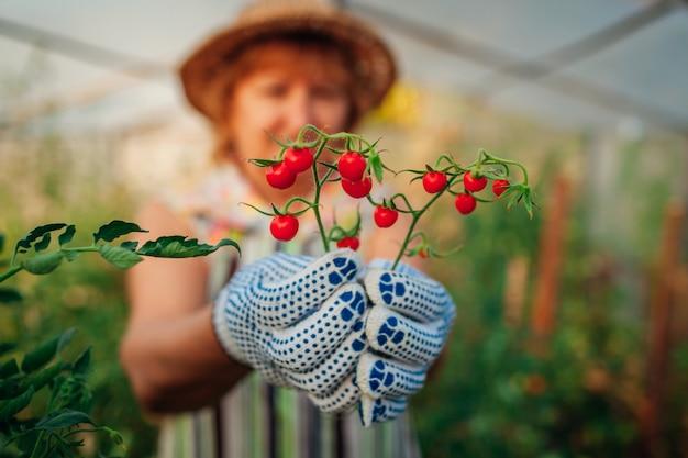 Женщина собирает помидоры черри в теплице