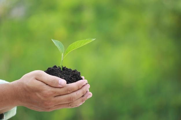 緑の植物を手に持った男を閉じる