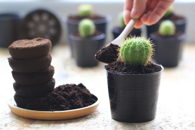 コーヒー粉、コーヒー残渣は木に適用され、天然肥料です