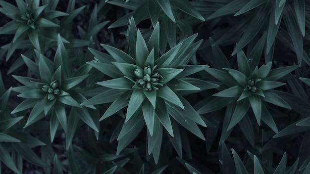 庭のユリの茎と葉。もやしユリをクローズアップ。