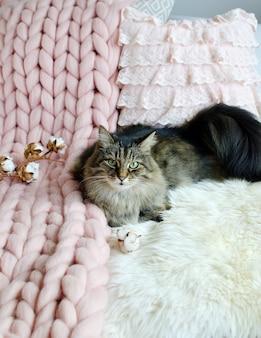ベッドに横たわっている猫巨大な格子縞の毛布毛皮の寝室冬のバイブコサインリラックス