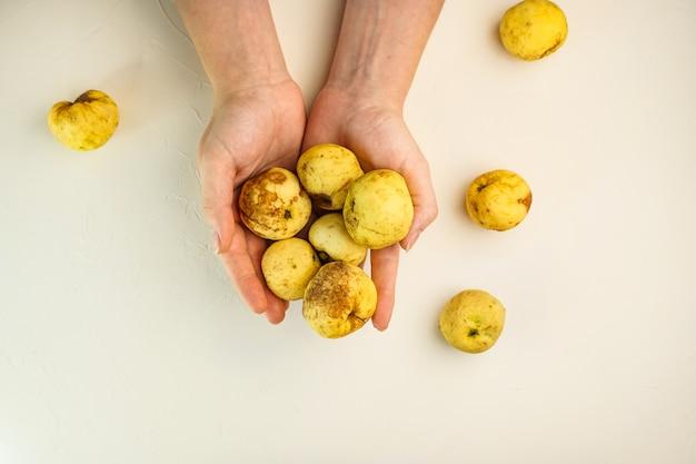 Выборочный фокус, уродливые яблоки в женских руках