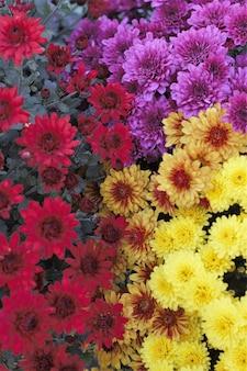 着色された花