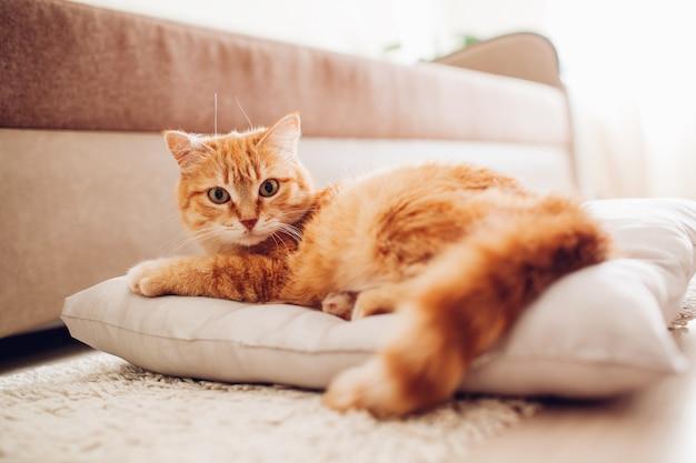 赤猫が自宅の枕に横になっています。