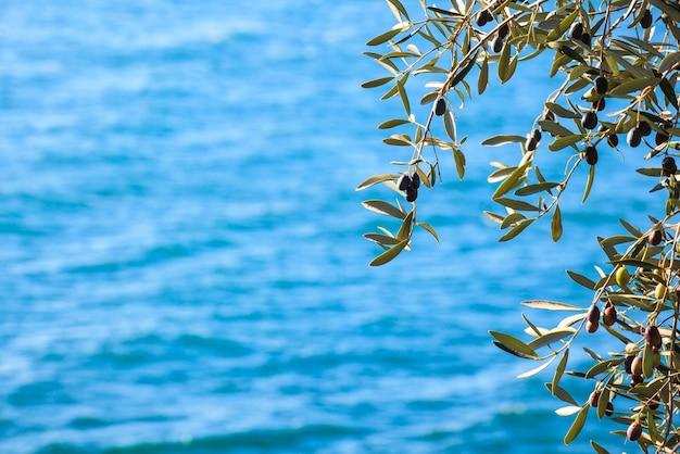 オリーブの木の葉