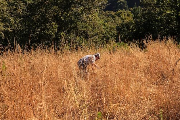 ハンドツールで収穫する人
