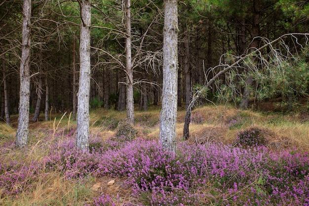木の下のヘザー花