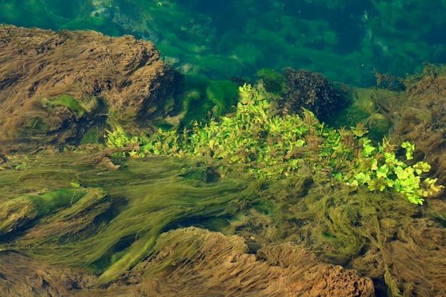 水に浮かぶ藻類やその他の植生