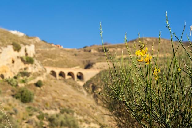 シチリアの田舎でほうき