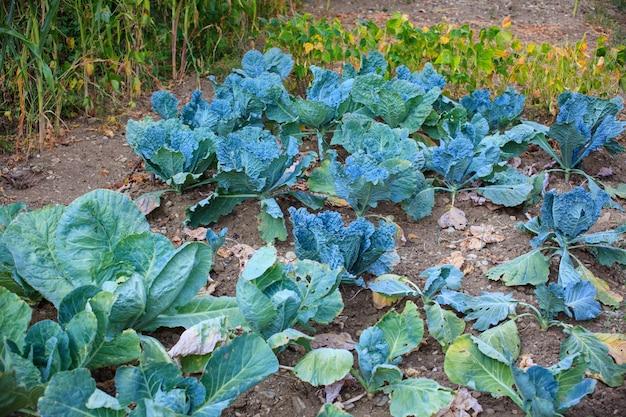 Поле для выращивания