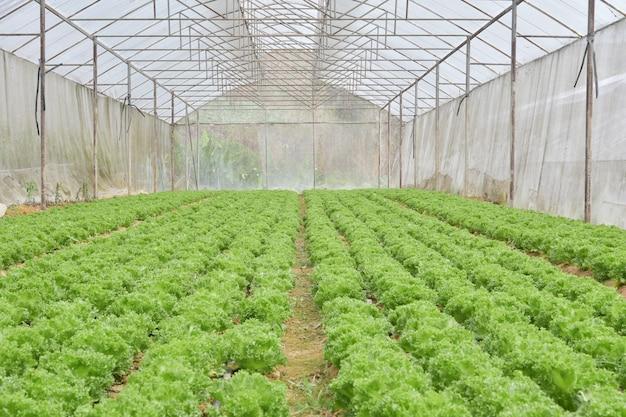 温室での野菜の有機栽培