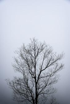 抽象化パターン黒と白の孤独な木の枝の背景