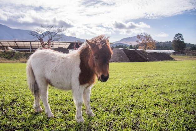 朝日の出の農場で若いかわいい馬
