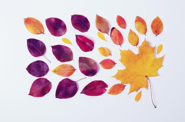 秋の国境白地に鮮やかな赤と黄色の葉の組成物。