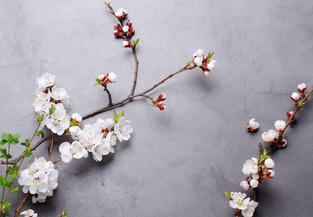 灰色の背景に開花アプリコットの枝を持つ春の花。フラットレイアウトのコンセプトです。