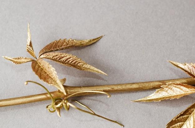 野生ブドウの葉は金で塗られています。灰色の背景上のコンセプト静物。