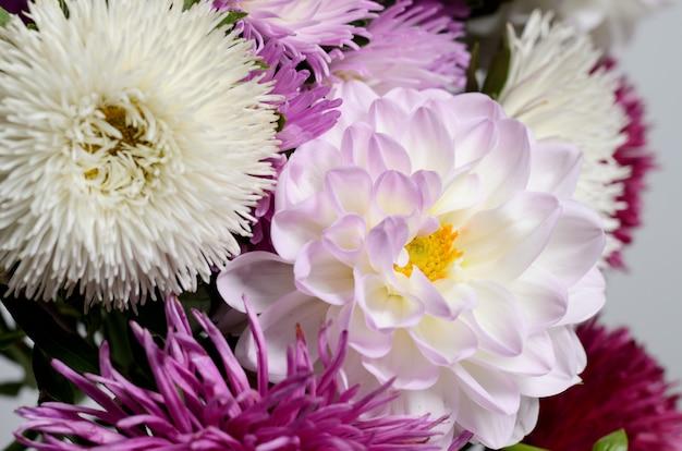 鮮やかな色の菊の花束。秋の花の背景