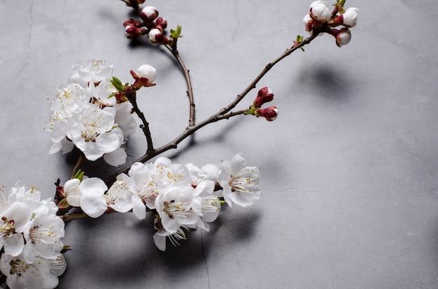 灰色の背景に開花アプリコットの枝を持つ春の花
