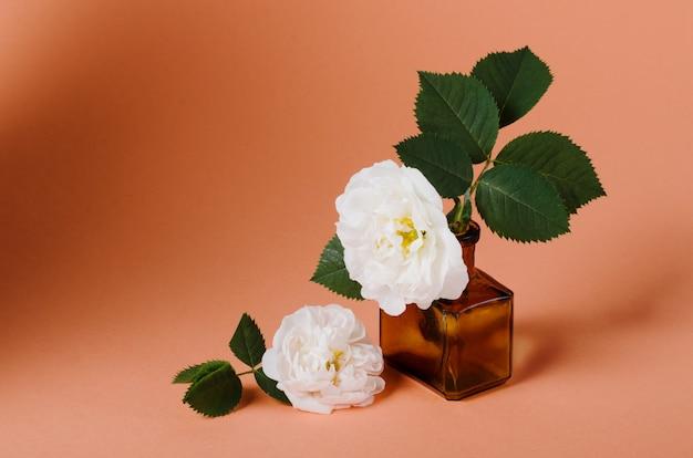 古いビンテージボトルの穏やかな白い春のバラ