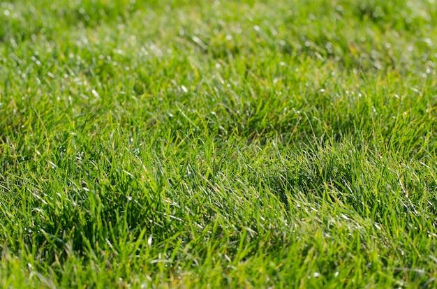 秋の晴れた朝にクモの巣によって満たされる緑の草の牧草地