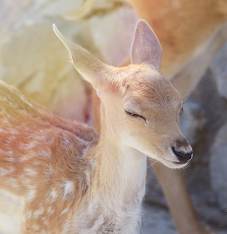 夏の日光の下で斑点を付けられた子鹿