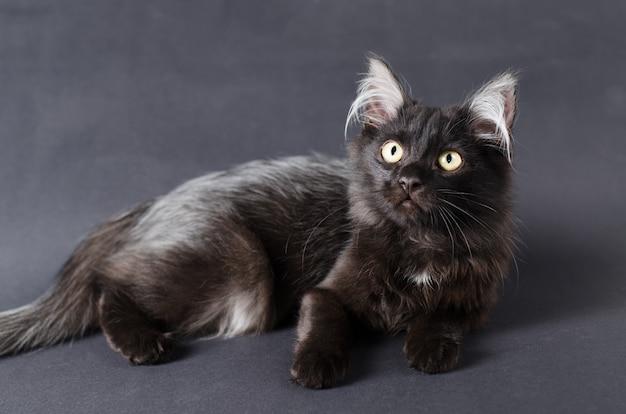 Молодой очаровательный черный кот