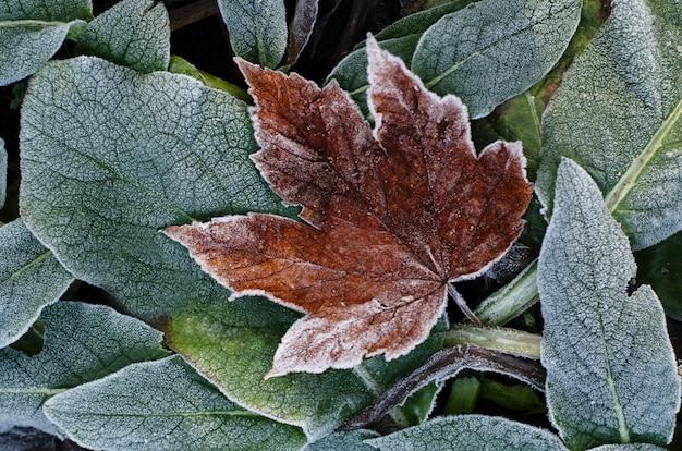 乾燥した紅葉をつや消し。冬の自然