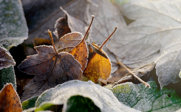 乾燥した紅葉をつや消し。