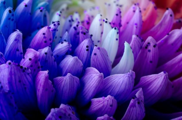 虹色のダリアの花びら。