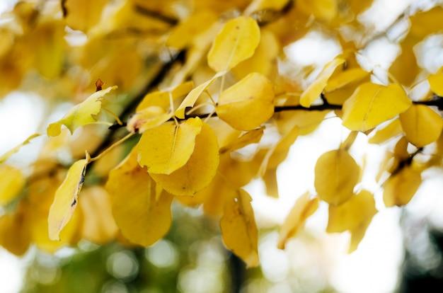 Яркие желтые осенние листья под солнечным светом. осенний сезонный фон
