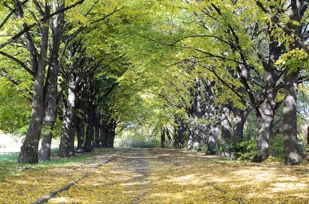 都市公園のツリーまっすぐな路地