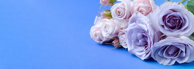 青色の背景に美しい穏やかな青いバラとロマンチックなバナー。