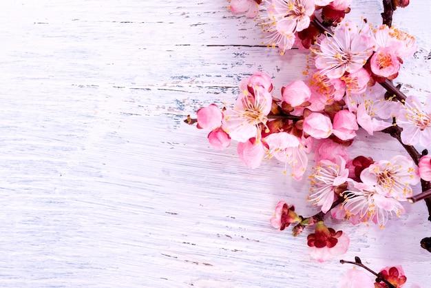 ピンクの壁に白い梅の花。毎年恒例の新年。