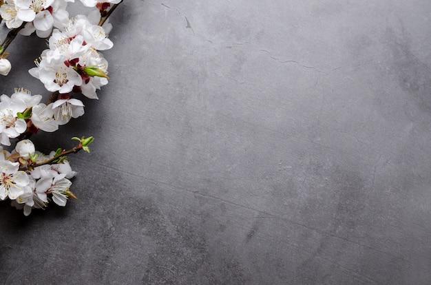 灰色の背景にアプリコットの開花枝と春の花。フラット横たわっていたコンセプト。