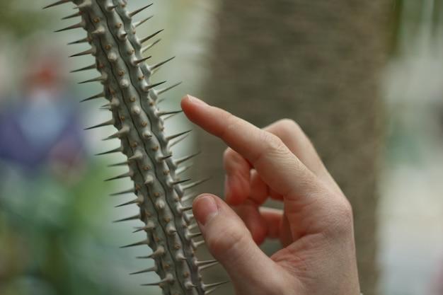 男性の手がサボテンの針に触れます。植物園の湿度を確認します。ぼかし、きれい、明るい、モダン、カラフル、コントラスト、セレクティブフォーカス。痛みの概念。
