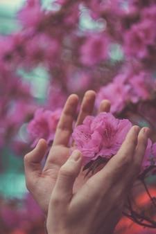 男は自然を守り、地面から生えるピンクの花の周りに男性の手、最初の花の若い芽、春を守ります。保護と監護の概念。