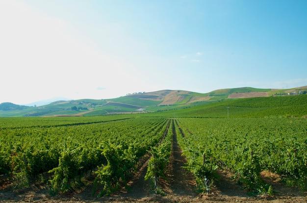 イタリアの美しいブドウ畑の風景