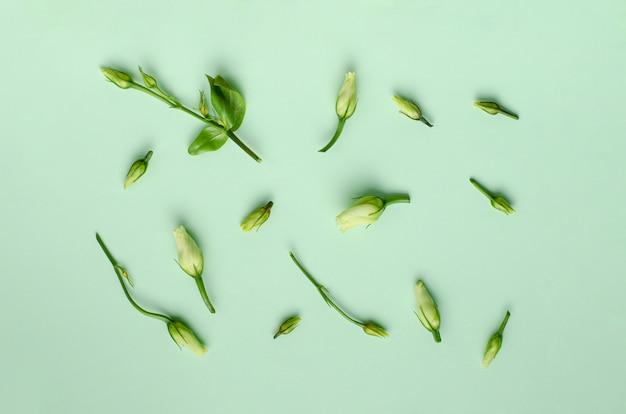 パステルグリーンの芽で作られたフレーム構成。