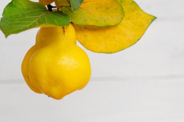 白に熟した黄色マルメロ