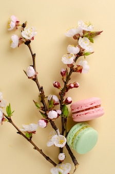 フランスのカラフルなマカロンやパステルベージュに咲く杏の木の花とマカロン