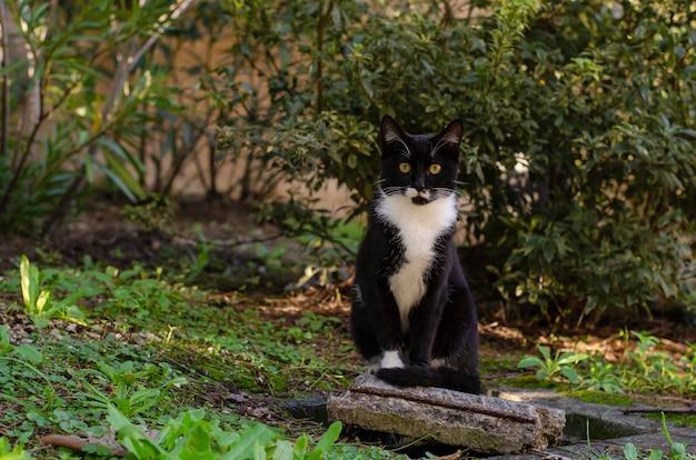 公園のレンガの上に座っている白い首と黒のホームレスの猫。野生動物のコンセプト