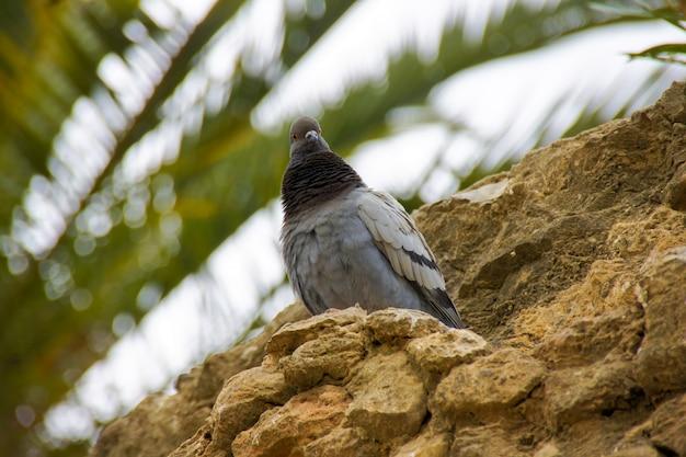 岩の上に座って鳩、屋外の自然