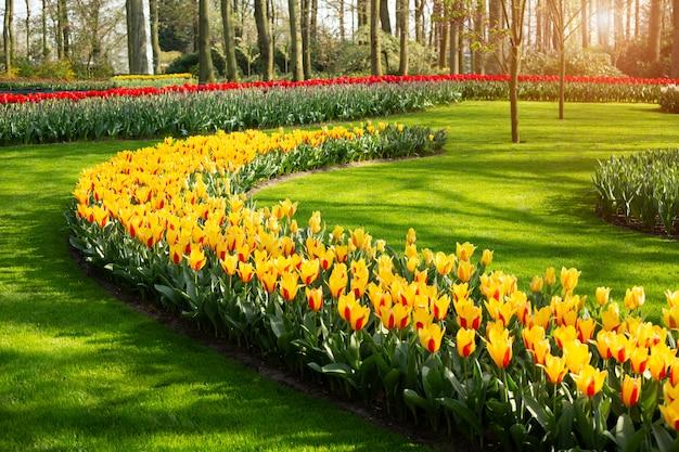 晴れた日の公園で美しい春のチューリップの花
