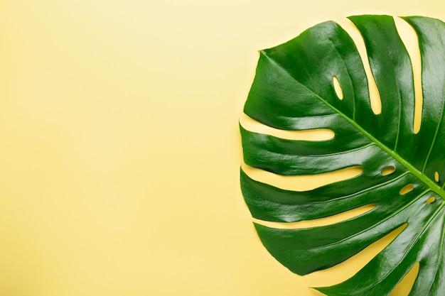 Тропический лист монстера на желтом фоне. вид сверху. плоская планировка