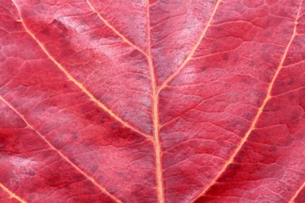 Красная текстура осенних листьев