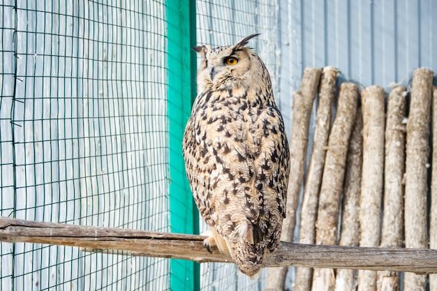 Большая сова сидит на ветке в клетке в зоопарке