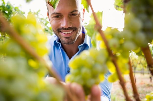 ブドウに触れる笑みを浮かべて男