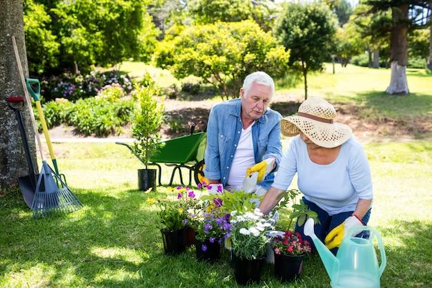 Пожилая пара в саду