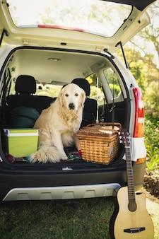 車の中で犬に焦点を当てる
